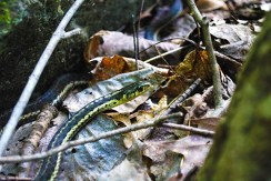 A snake.