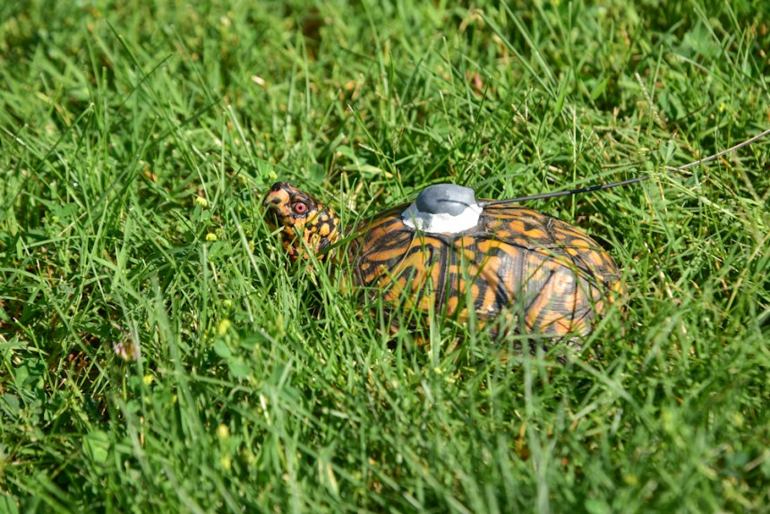 The Story of LEGO® Turtle has a happy ending, shown here with the turtle back in the wild.