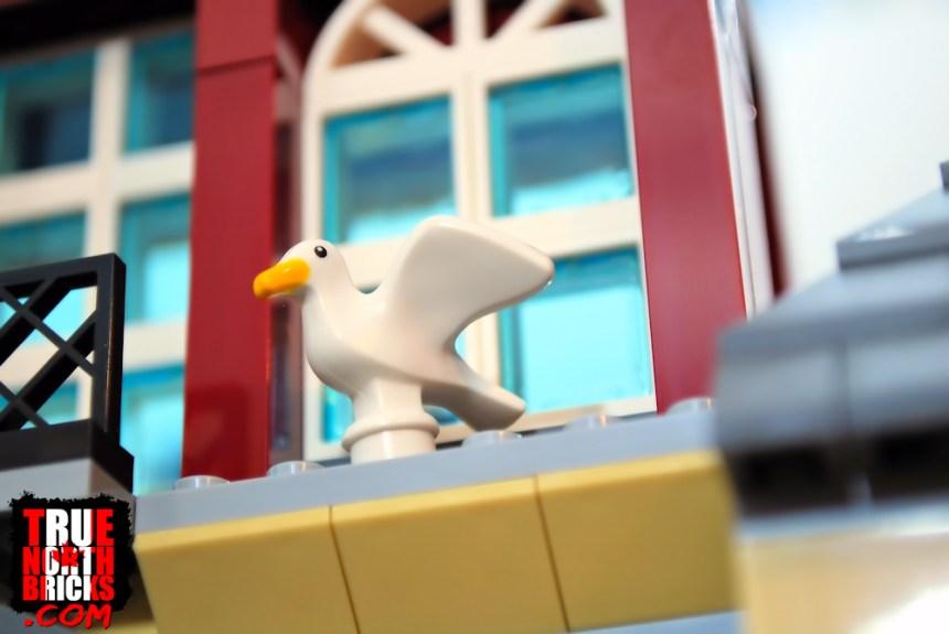 Seagull in Main Square (60271)
