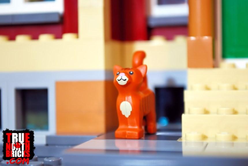 Cat in Main Square (60271)