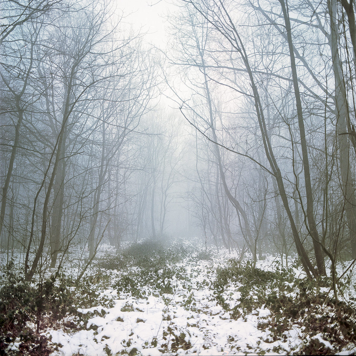 Contemporary Landscape Photography - Hundred Acre Wood