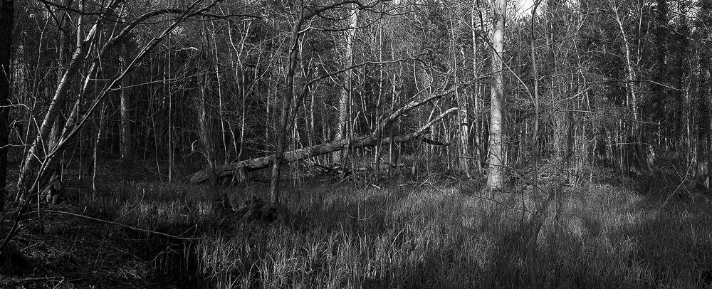 Widelux Test fallen tree