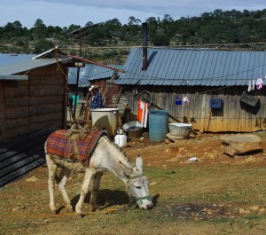A local home and burro.