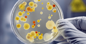 Lobbyists Unite At UN To Put World Biosafety in Danger