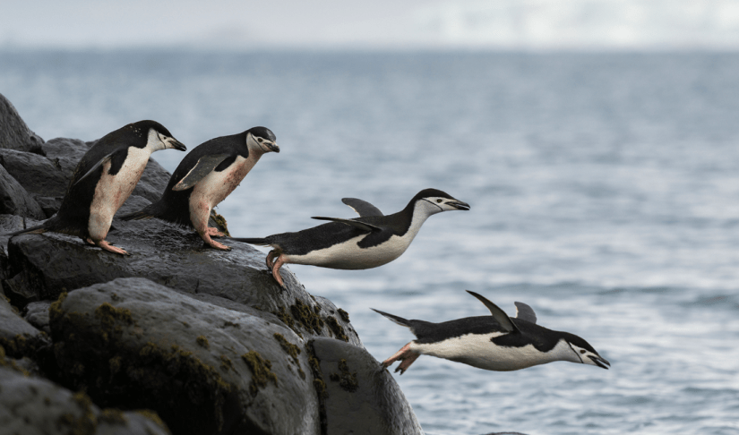 North and South Poles attract marine life avoiding rising heat