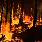 Obama Falsely Links Fires to Climate Change at Yosemite