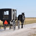 Amish Teen Charged With Driving Horse While Intoxicated