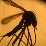 Don't Count on Winter to Save Us From Zika