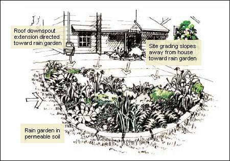 Rain Garden Example