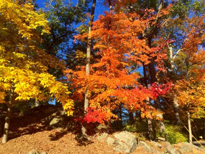 Intense Colors (photo by Susan Enos)
