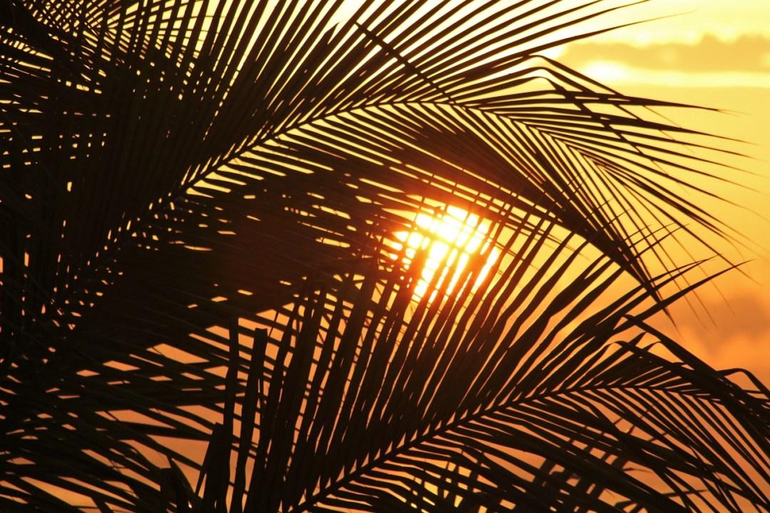 sun-of-jamaica-1111756_1280
