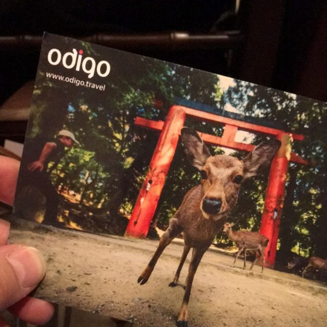 Nara and our dear DEER -- postcard by Nathan Hoskens
