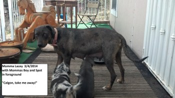 Lacey with first litter pups