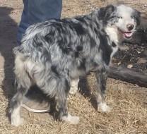 Bessie (7 months)