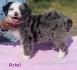 Ariel 8 weeks