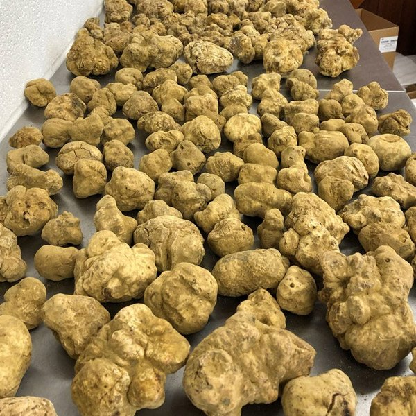 the-truth-about-white-truffles
