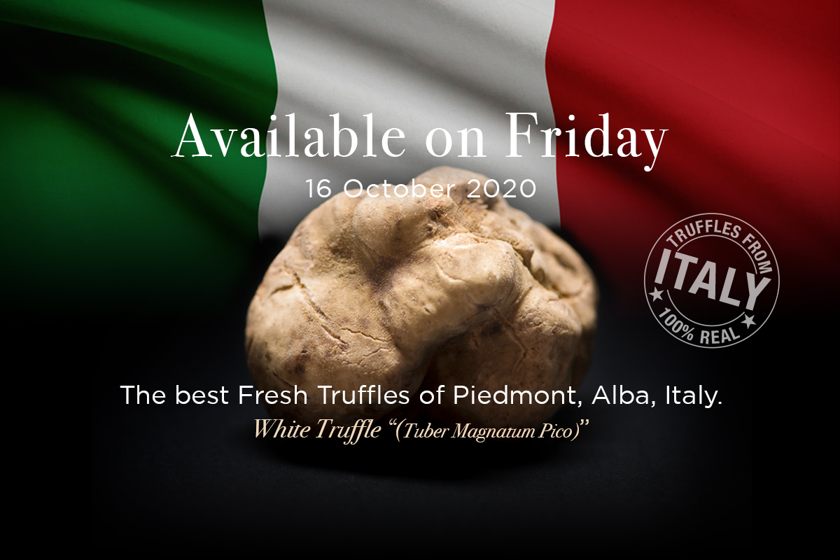 the-finest-fresh-white-truffles-in-season-straight-from-alba-italy-to-thailand