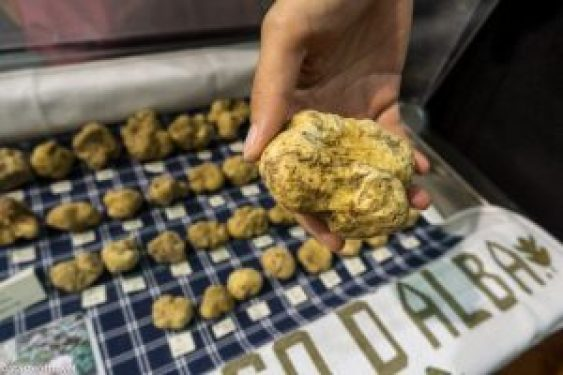 Alba truffle fair 2019 in Piedmont Region