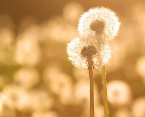 Truii data visualization, analysis and management dandelion field wide