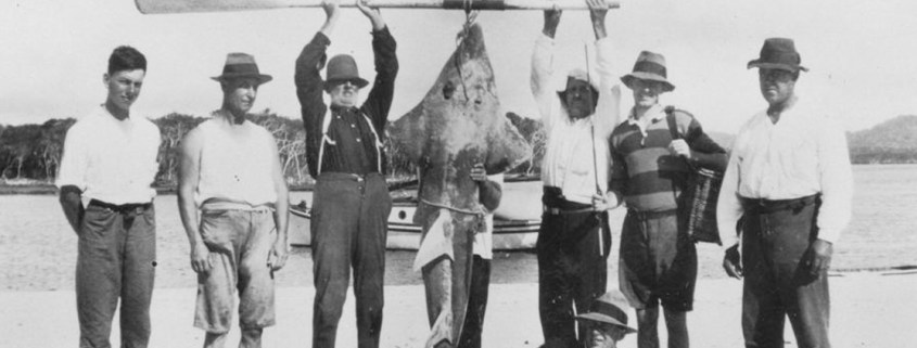 Truii data visualisation, analysis and management Shark caught on a Queensland fishing trip ca_-1920