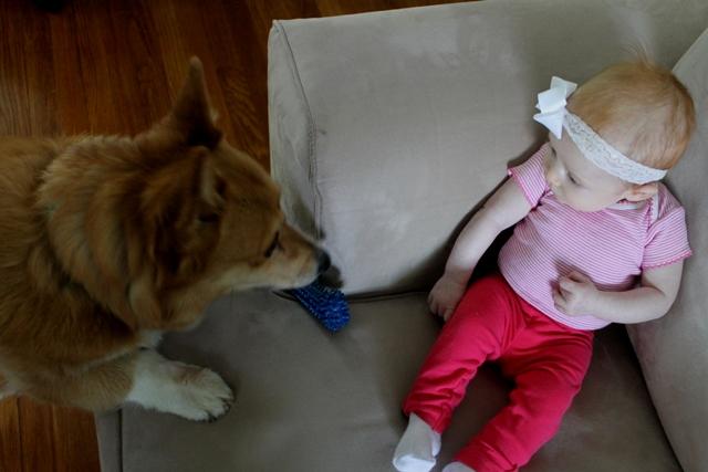 Baby Girl and Her Corgi