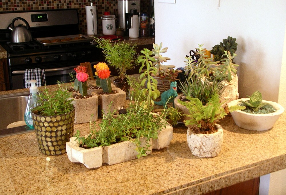 Baby, it's Cold out there -or- Overwintering the Succulent Friends (3/3)