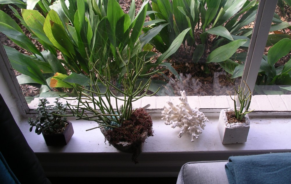Baby, it's Cold out there -or- Overwintering the Succulent Friends (1/3)