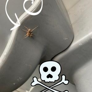 Spider had to die!