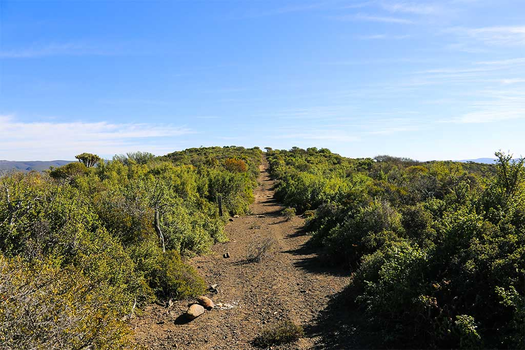Trumpeters-Drift-Gallery-Path-on-Reserve