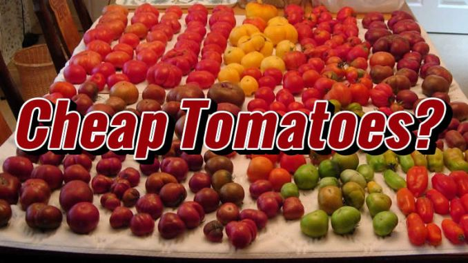 Cheap Tomatoes