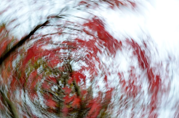 red-leaves-1-icm