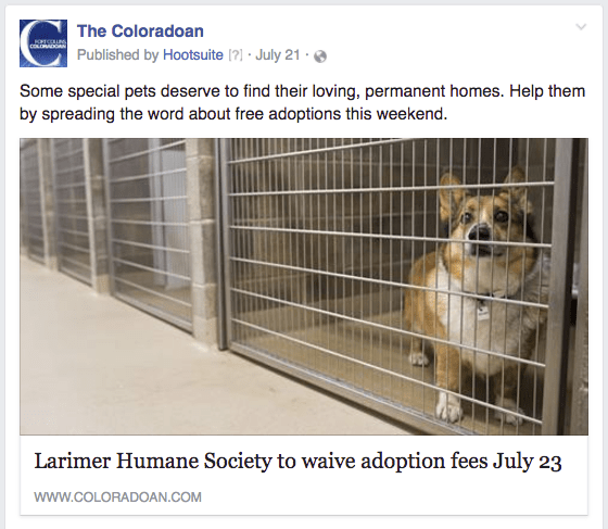 CO pet adoptions