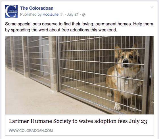CO pet adoptions