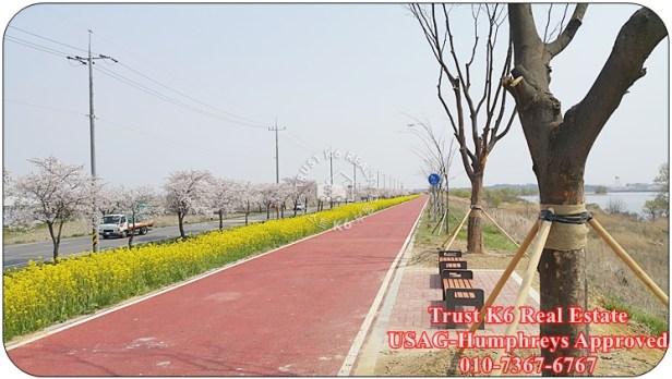 Anseong River Cycle Lane (4)