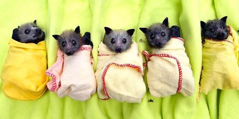 refuge chauve-souris niche construire bat box moustiques