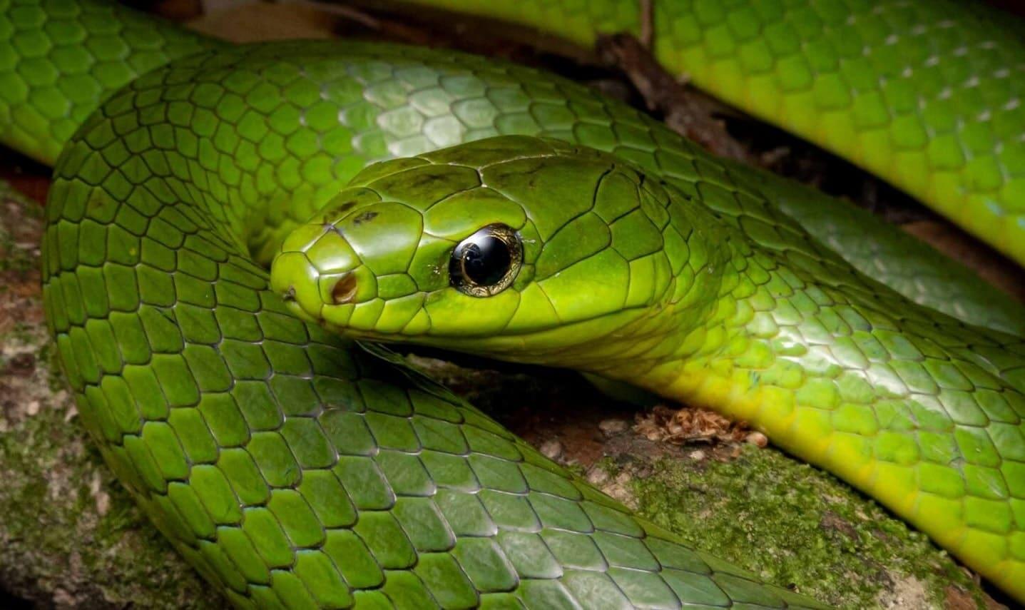 Les serpents peuvent-ils entendre ?