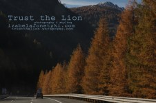 lion_IMG_3488 copy