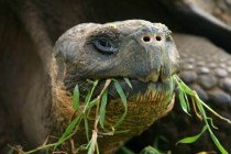 tortoise grass