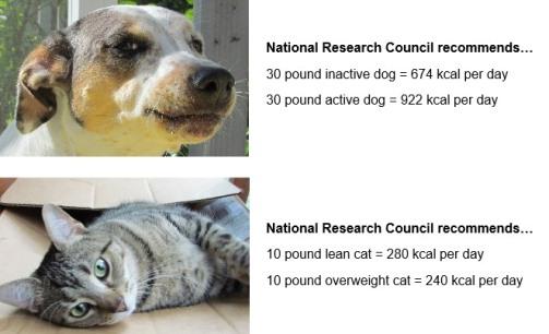 NRC calories