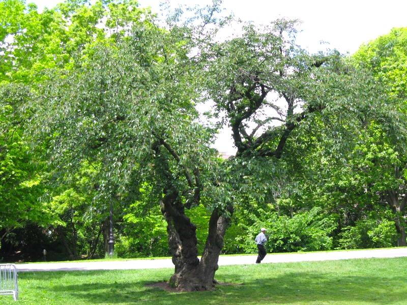 bee-tree