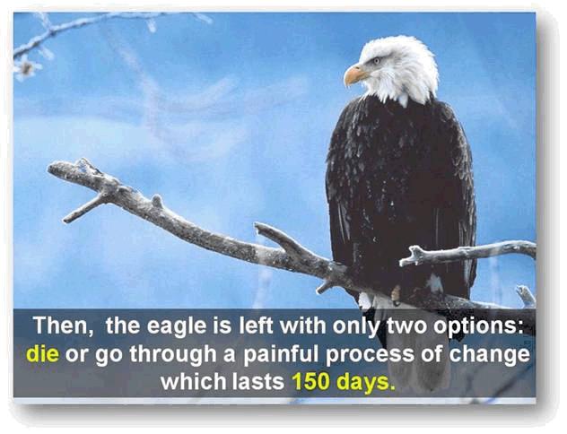 Transform Like an Eagle (6/6)