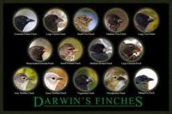Darwin's finches 3