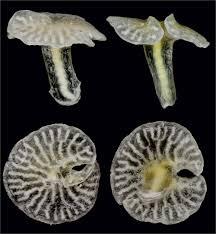 Similar fossil 2