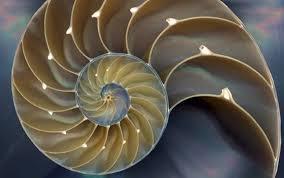 The Golden Spiral shell
