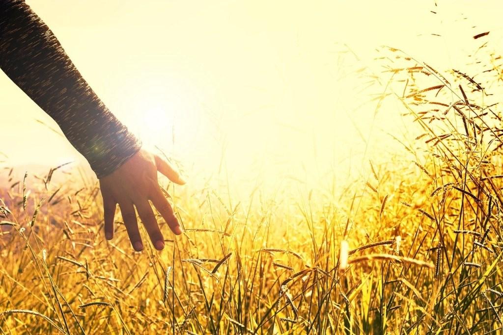 meadow, field, sunset-2667461.jpg