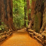 giant-redwoods-trail
