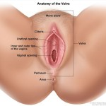 vagina-final