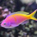 fish237