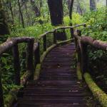 forest-vs-jungle