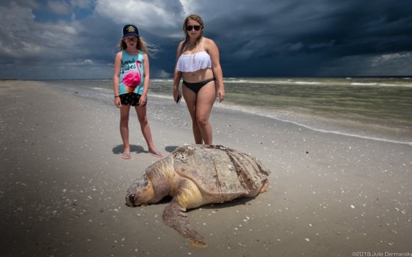 Womble sisters and a dead loggerhead sea turtle on Sanibel Island.